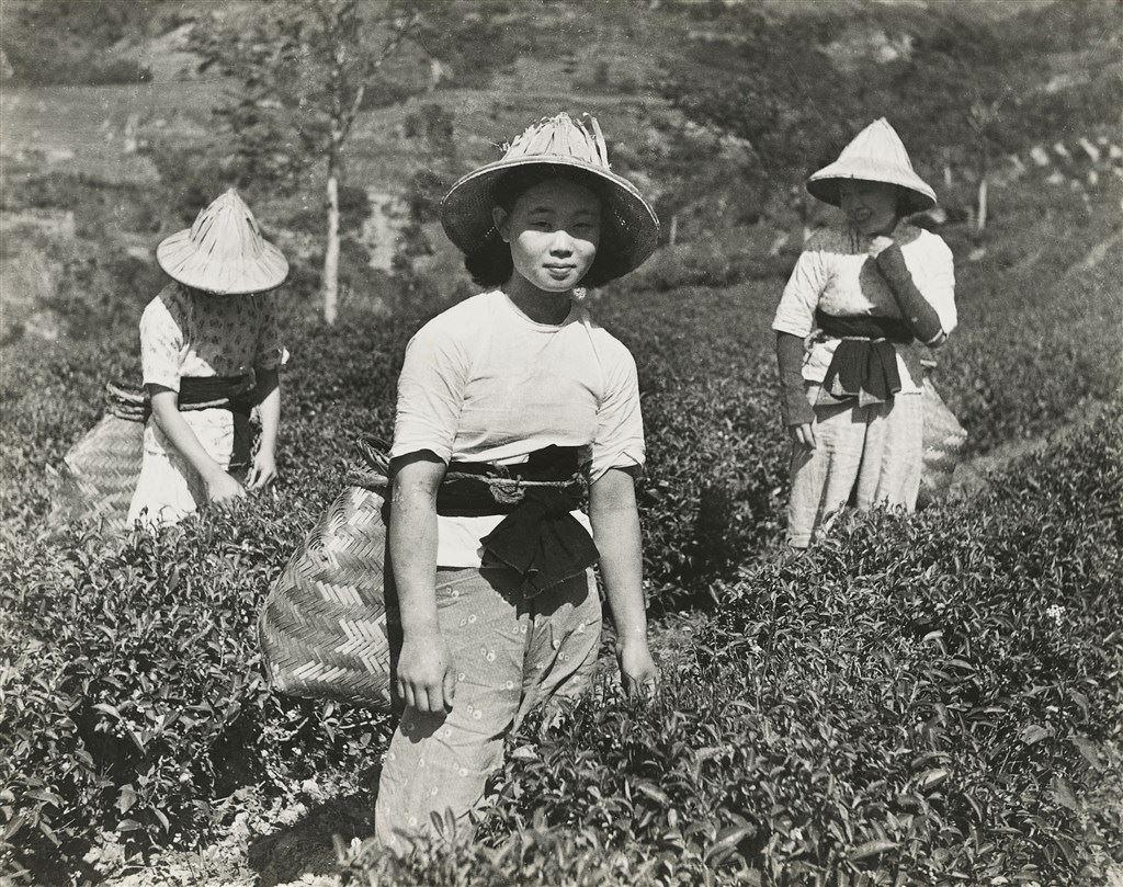 Sanxia Tea Garden